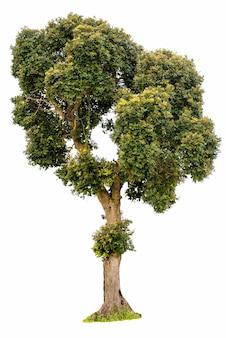 白い背景の上の孤立した木緑の木々のコレクション