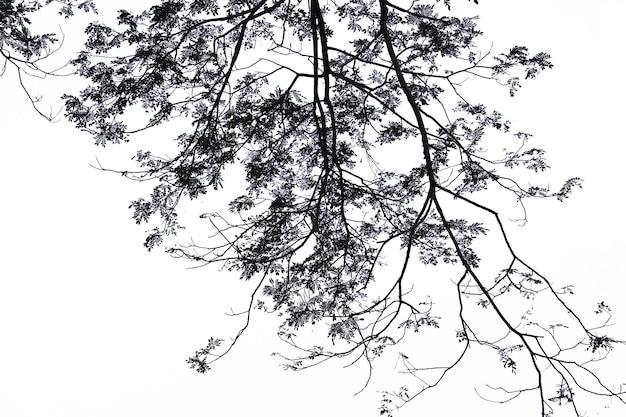 白い背景の上の孤立した木。
