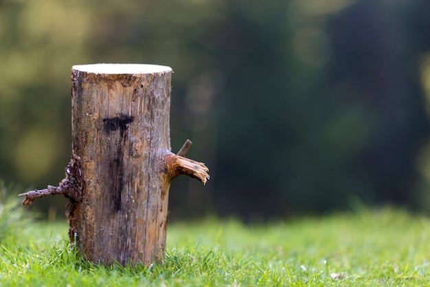 Isolated tree stump outdoors on grassy sunny summer forest clearing on dark green wood foliage