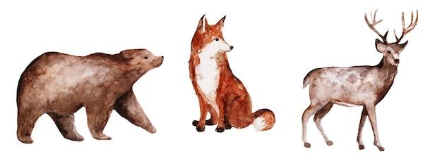 Isolated watercolor bear deer fox hand drawn animals set