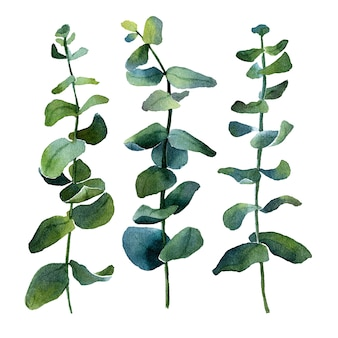 ローズマリー、ユーカリ、オリーブ、その他の緑の植物の孤立した水彩画の画像。さまざまな形と色合い
