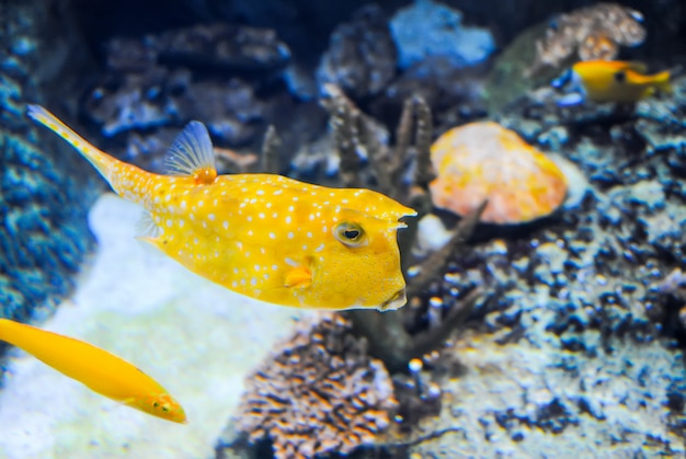 Istanbul aquarium received visitors after restoration.