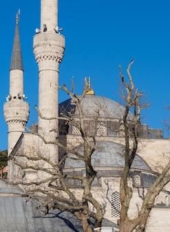 青い空を背景に木とイスタンブールのモスクの断片