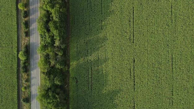 Он пролетает над дорогой и кукурузным полем, разделенными лесной полосой.