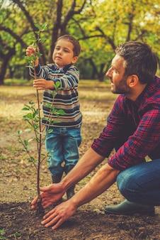 그것은 큰 나무가 될 것입니다! 정원에서 함께 일하는 동안 아버지가 나무를 심는 것을 돕는 어린 소년