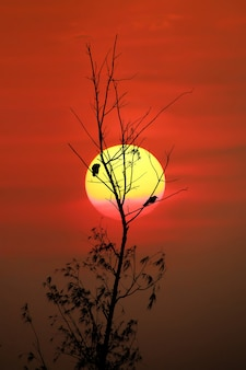 It is a reflection of the light of a bird on a flowering tree.