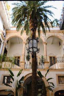 Italian courtyard with palm tree
