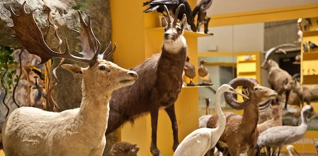 イタリア、非常に古い自然科学博物館の内部