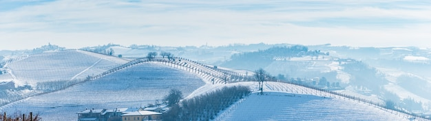 Italy piedmont: row of wine yards, unique landscape in winter with snow