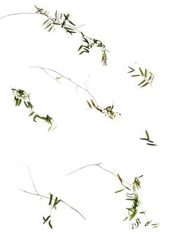 Предметы осеннего гербария. сухие стебли и листья гороха полевого. фон для эко-дизайна.