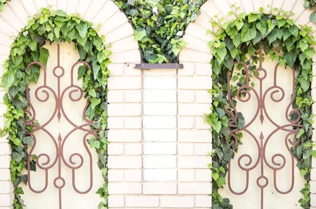 Ivy on a forged fence. an ivy twig on a beige brick