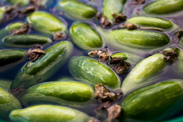 Ivy gourd soaking in water