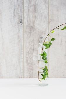 木製の壁の白い机の透明な花瓶のアイビー