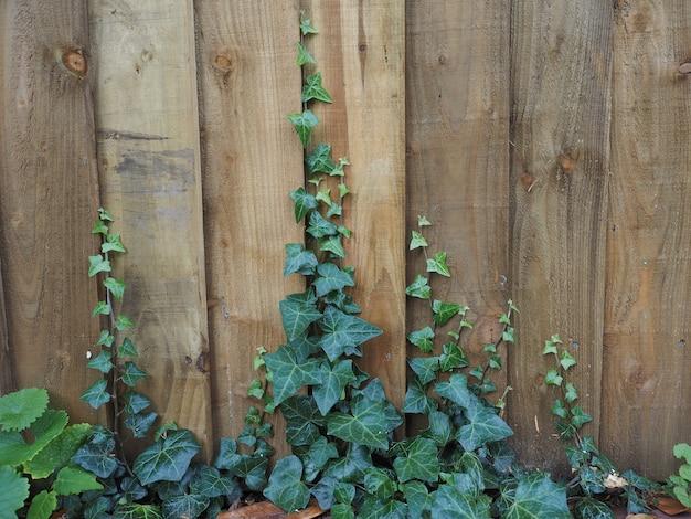 柵の上のツタの植物