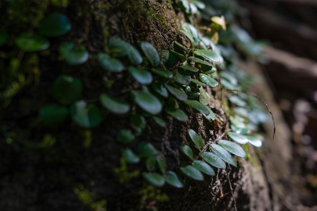 Ivy on rock
