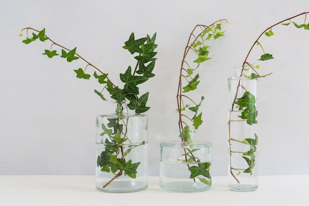 Ivy in three different types on glass vase against white background