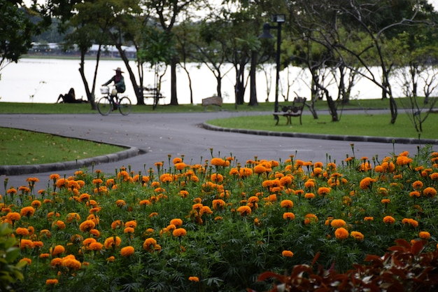 Желтый красный цветник в суан луанг рама ix общественный парк таиланд