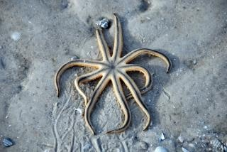 Звезды в ловушке на песке, штат флорида, j
