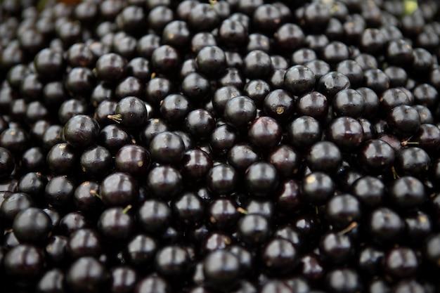ジャボチカバ、バジル産の原産ブドウ