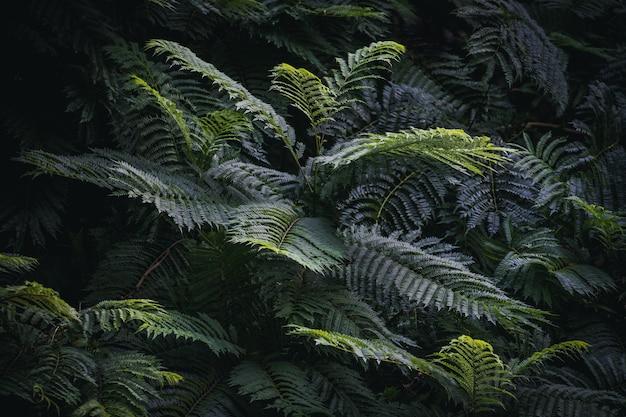 Листья дерева жакаранды