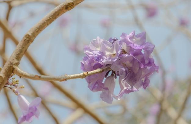 ライラック色の花とジャカランダの木