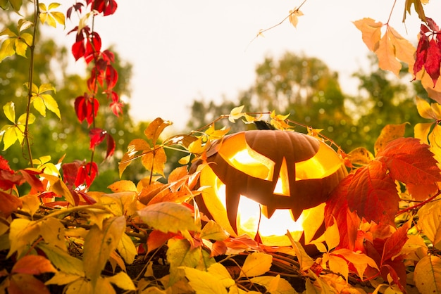 Jack o'lantern and autumn leaves