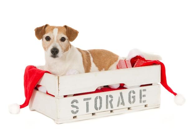 Собака джек рассел в ящике для хранения с елочными украшениями