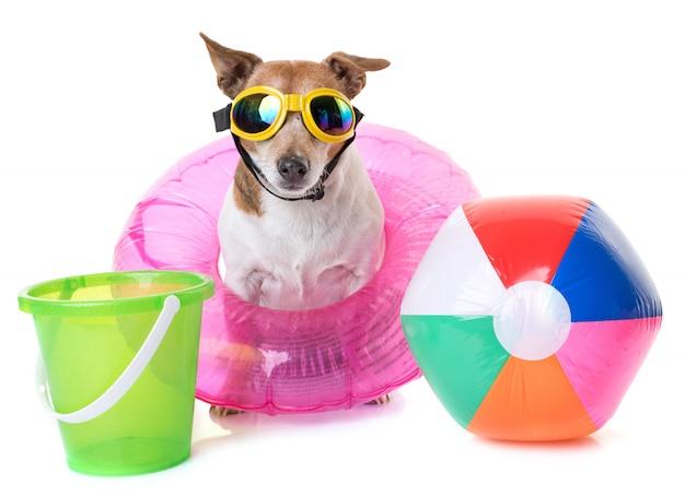 Jack russel terrier on beach