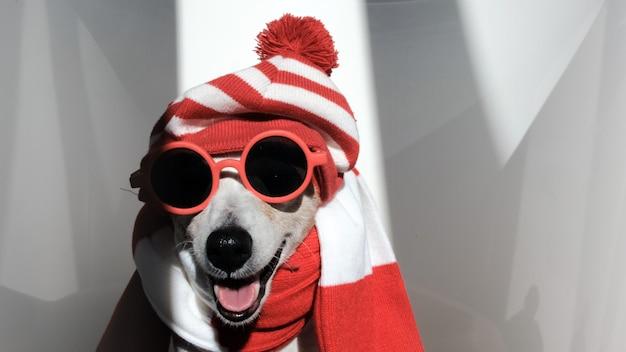 줄무늬 모자와 스카프를 쓴 잭 러셀 테리어, 선글라스와 월리