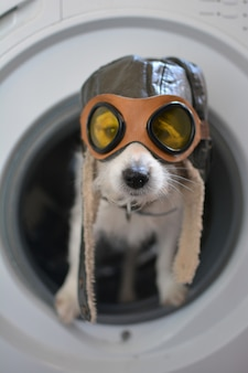 Jack russell dog inside a washing machine wearing a aviator or pilot hat.