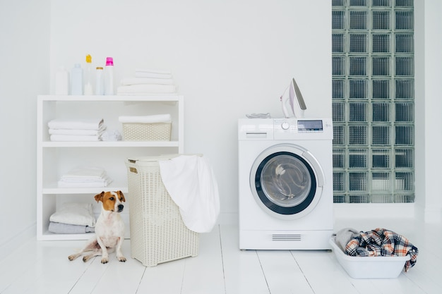 Jack russell terrier in bathroom with mashing machine