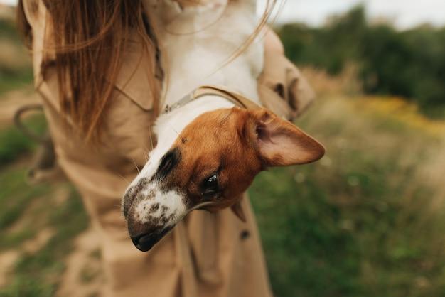 그의 여주인의 팔에 잭 러셀 테리어 클로즈업. 애완 동물