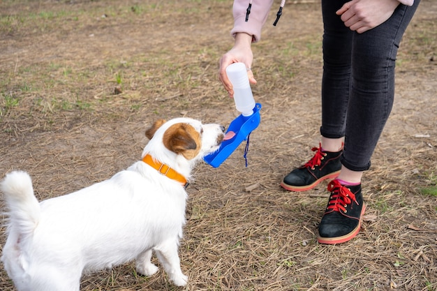 Собака джек-рассел-терьера пьет из специальной переносной бутылочки для питья во время прогулки по лесу с хозяином