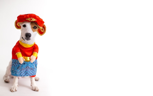Jack russell terrier dog with chinese costume god of fortune
