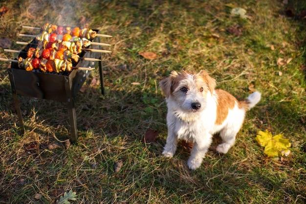 バーベキューの隣に座っているジャックラッセルテリアの子犬