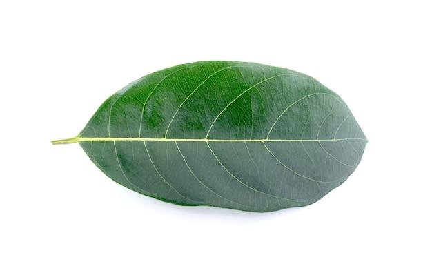 Листья джекфрута на белой поверхности