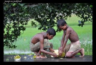 Jackfruit amanti