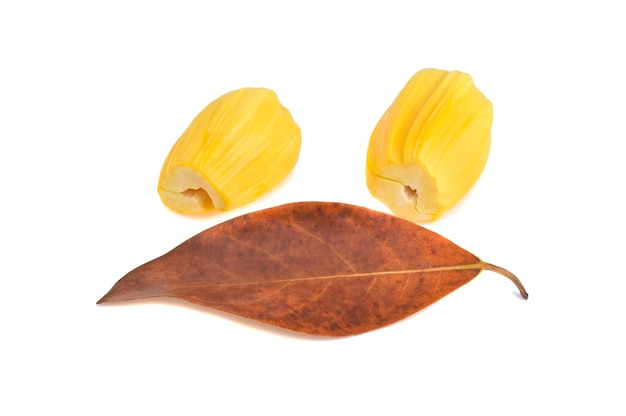 Jackfruit 잎 흰색 배경에 고립 된 jackfruit