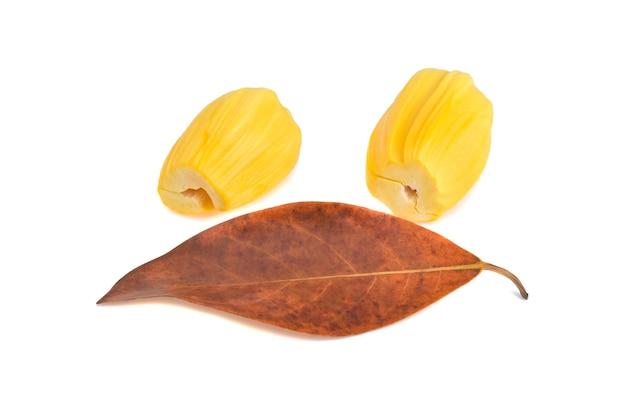 Jackfruit with jackfruit leaf isolated on white background