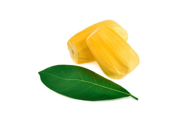 흰색 배경에 고립 된 잎 jackfruit