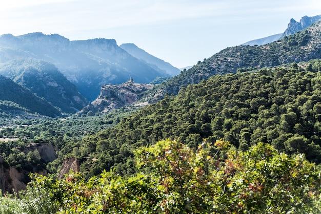 オリーブの木のフィールドjaen andalusiaスペイン
