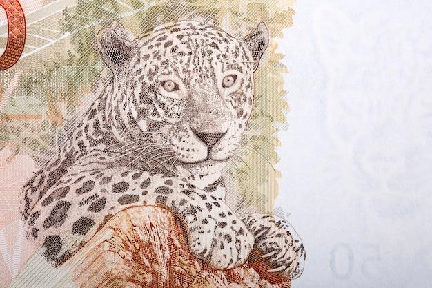 Jaguar a portrait from brazilian money