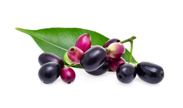 Jambolan plum iaolated