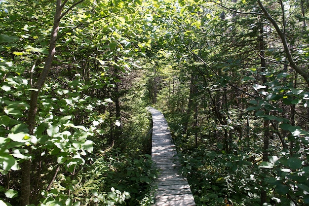 James w. humber hiking trail, norris point, gros morne national park, newfoundland and labrador, can