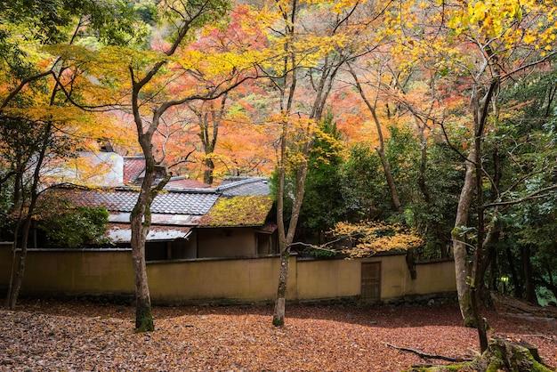 Japan house with autumn tree, arashiyama