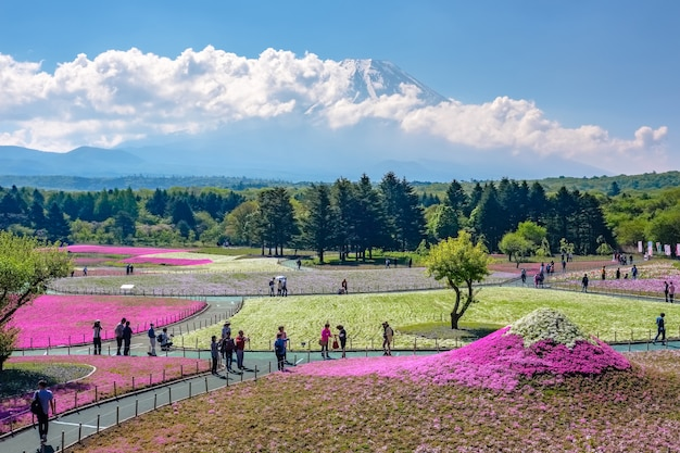 Япония - май 19,2017: туристы наслаждаются осмотром достопримечательностей фестиваля шибазакура в саду шибазакура (розовый мох) с mt. фудзи фон, фудзиномия
