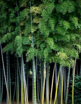 背景の日本の竹の木