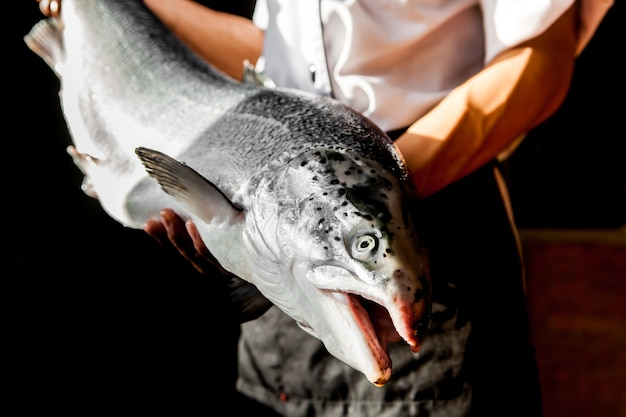 Japanese chef is offering salmon for cooking.