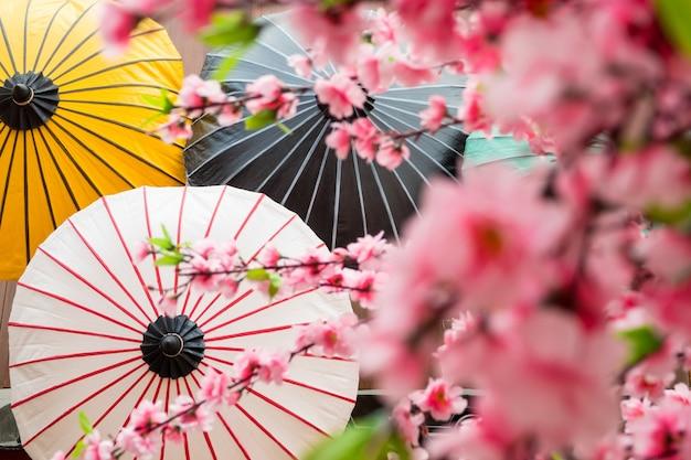Japanese decoration background with blossom sakura and umbrella
