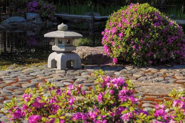 Japanese garden. beginning of flowering in spring. spring flower background.
